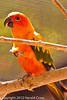 A Sun Conure taken Jun. 27, 2012 in Salt Lake City, UT.