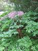 jurassic plants - golden gate park