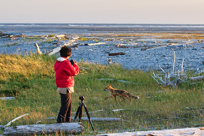 renard-roux-photographe-plage-anticosti