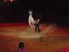 This horse jumped straight up in the air from a standstill.