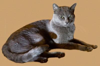 Ari cat 751cat txtr