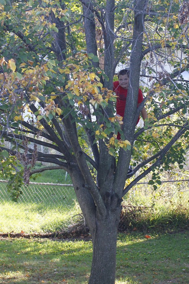 Jacob in Jim's tree