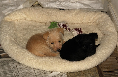 Two of the little puppies taking a nap...