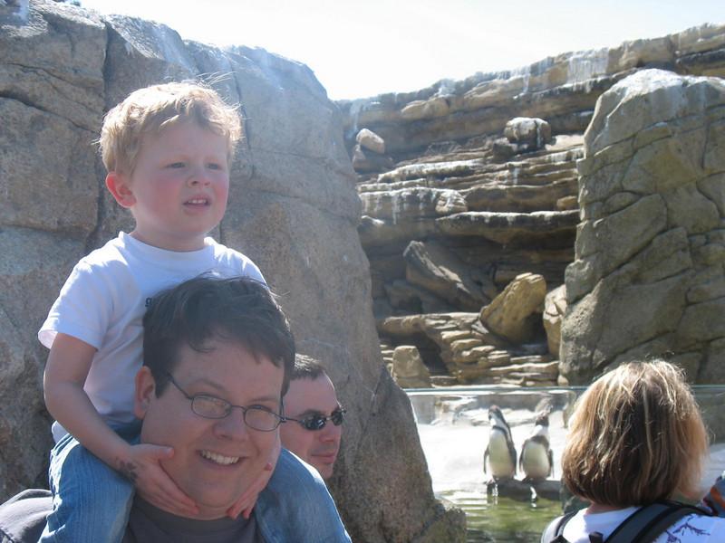 Neues Pinguin-Gehege im Woodland Park Zoo