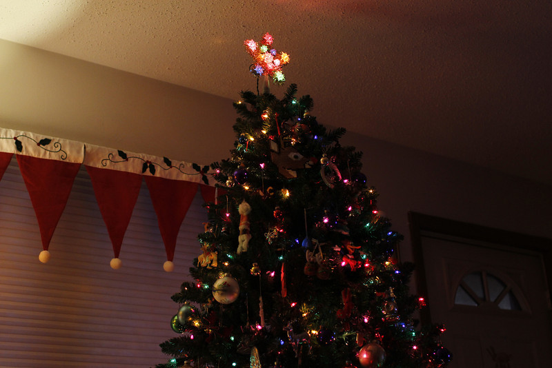 Cyndy's tree
