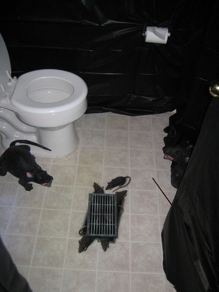 rats coming from the bathroom floor!