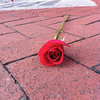 Someone abandoned a rose on the sidewalk in Fells Point