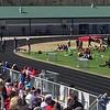 R Finch 100m Heat