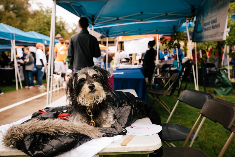 A handsome pup holding down the fort at one of the vendor booths.