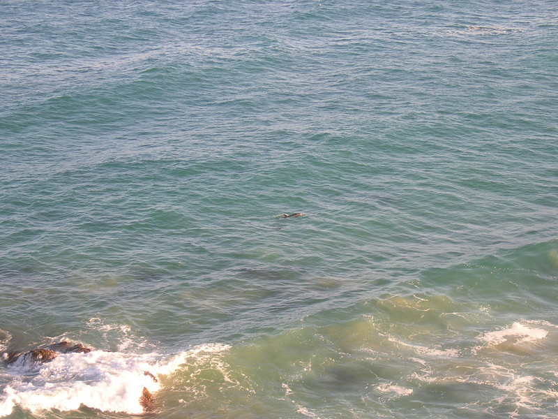 Dolphins, Sapphire Beach, Coffs Harbour