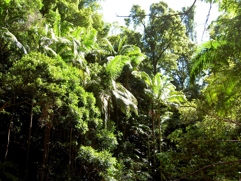 Rainforest at Protester's Falls