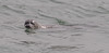 A Harbor Seal checks my camera out.