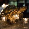 Tortoise 12 2 18_WR-6464