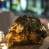 Tortoise 12 2 18_WR-6463