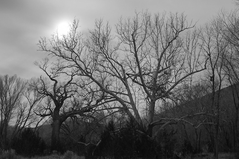 Winter trees, winter sky.