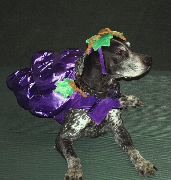 Grape Hound