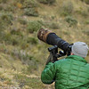 Photographing Andean Condor, Vultur gryphus