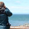 Punta Arenas, Birding the Straits of Magellan