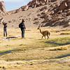 Photographing Vicuñas near San Pedro de Atacama, Antofagasta, Chile
