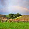 rainbow-niner vineyard heart hill