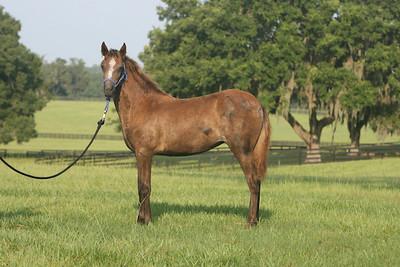foal 4
