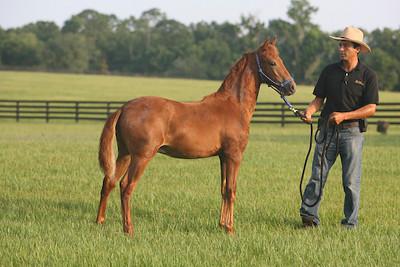 foal1