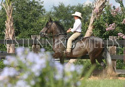 Tormenta saddle