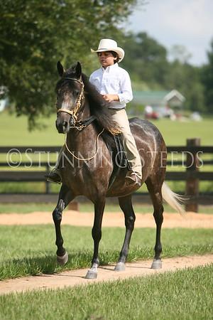 Plegaria under saddle