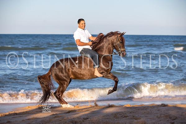 Desvelo - Beach - Under Saddle