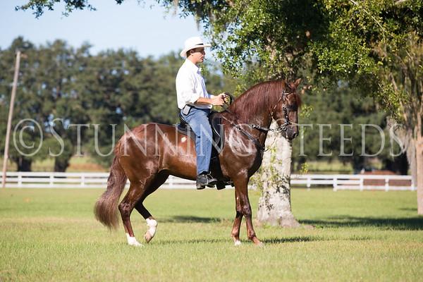 Desvelo under saddle 2013