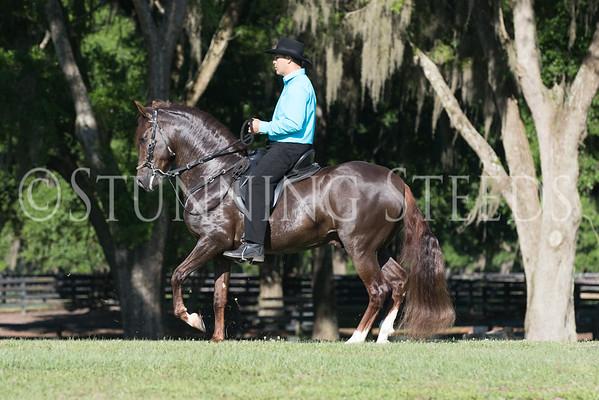 Desvelo under saddle 2015