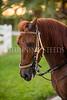 StunningSteedsPhoto-HR-7663