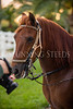 StunningSteedsPhoto-HR-7668