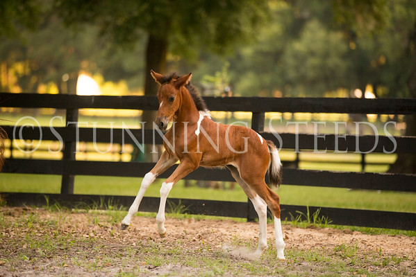 2015 Eminente Filly