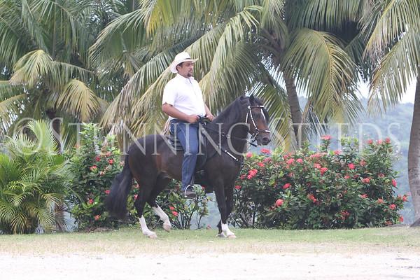 Halago de San Isidro - under saddle