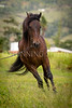StunningSteedsPhoto-HR-9665