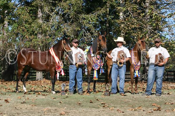 Champions of Ochoas Ranch