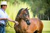 StunningSteedsPhoto-HighRes-0393