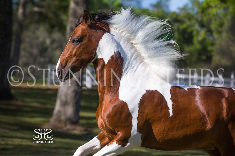 StunningSteedsPhoto-HR-1575
