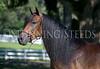 StunningSteedsPhoto-HR-6435