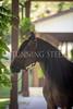 StunningSteedsPhoto-HR-6427
