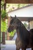 StunningSteedsPhoto-HR-6423