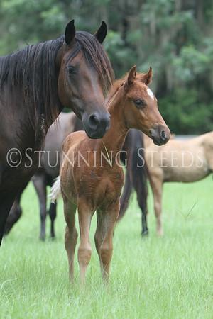 Lee's Foals