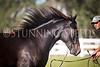 StunningSteedsPhoto-HR-3580