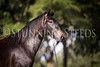 StunningSteedsPhoto-HR-3628