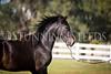 StunningSteedsPhoto-HR-3584