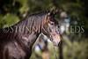 StunningSteedsPhoto-HR-3629