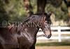 StunningSteedsPhoto-HR-3590