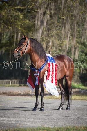R-Z - United Paso Fino Show Horses