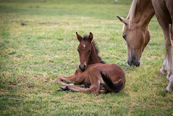 La Novicia de La Luisa & Valentino Foal